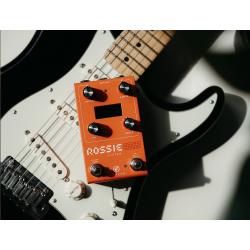 GFI System ROSSIE Filter 2021 Orange